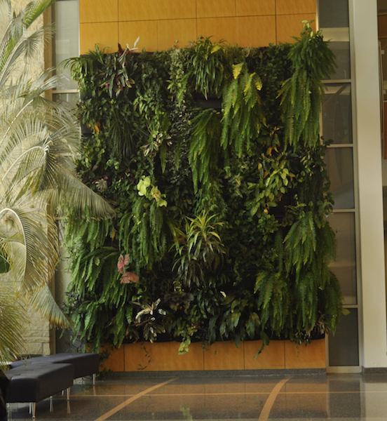 The 20-foot tall plant wall outside of Monsanto Auditorium in the Bond Life Sciences Center is a nod to coexistence and diversity. | Paige Blankenbuehler