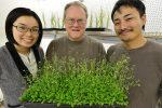 Bond LSC team identifies first plant receptor for extracellular ATP