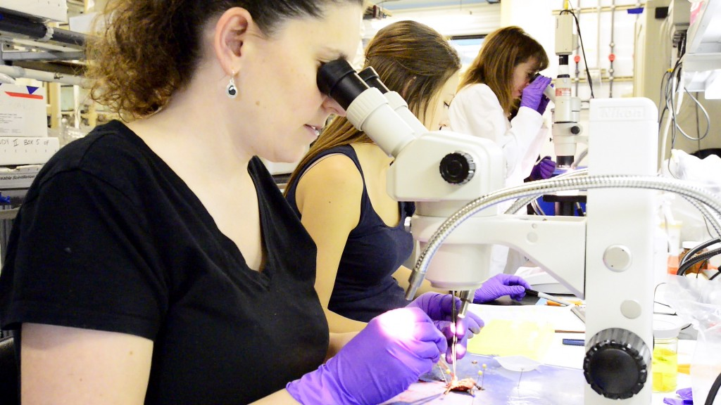 Dawn Holliday (left), Caitlin Jandegian and Cheryl Rosenfeld examine turtle gonadal tissue to determine if BPA affected proper sexual development. Photo by Roger Meissen | © 2015 - MU Bond Life Sciences Center