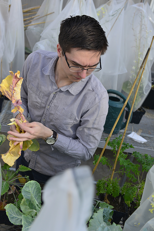 Hannah Baldwin/Bond LSC MU junior Kevin Bird inspects plants in a greenhouse on Monday, Feb. 23, 2015. Bird, who won an arts and science scholarship, is a student in Dr. Chris Pires' lab studying how plants express genes.