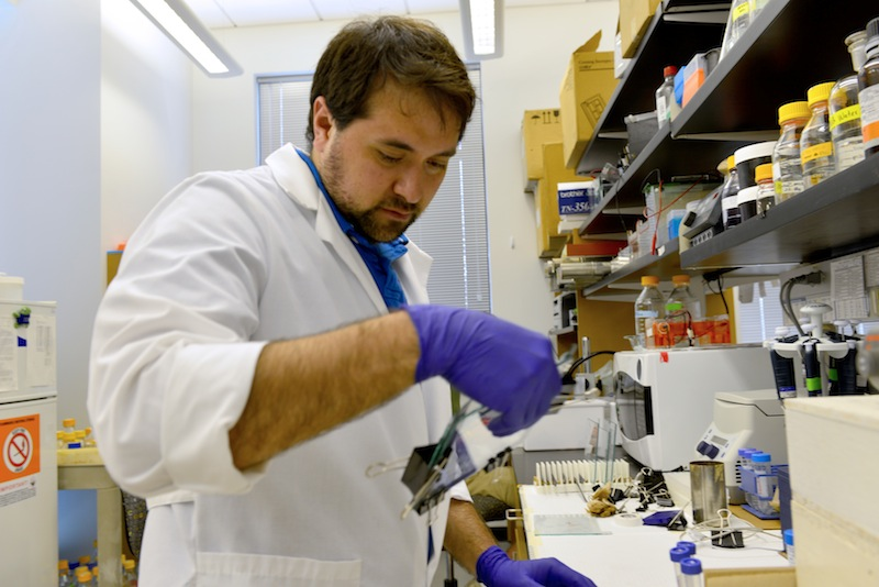 Eric Villalon, a graduate student in Michael Garcia's lab at the Bond Life Sciences Center, examines results. The Garcia Lab is answering news questions in cell mechanics. | PAIGE BLANKENBUEHLER