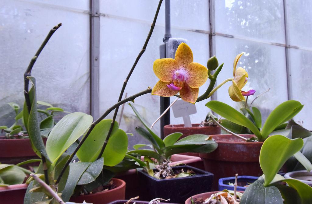 orchidedit5.jpg