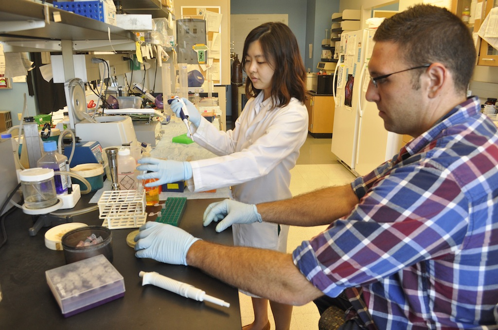 Graduate students Yuleam Song and Dan Salamango inoculate a bacteria culture in Johnson's lab. The inoculation takes a small portion of a virus and multiplies the sample, allowing researchers to custom-make viruses.